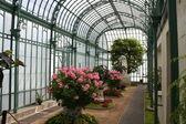 Laeken The Royal Greenhouses — Stock Photo