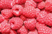 Raspberry pink — Stock Photo