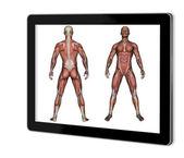 Human Anatomy - Male Muscles — Stock Photo