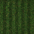 Green grass — Stockfoto #30064093