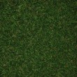 Green grass — Stockfoto #30098433