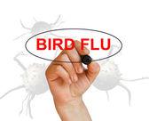 Ptasia grypa — Zdjęcie stockowe