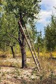 木の梯子 — ストック写真