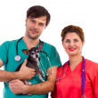 Two veterinarian doctors holding a chihuahua dog — Stock Photo