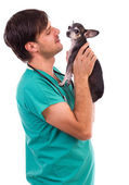 Veterinarian doctor holding a chihuahua dog — Stock Photo