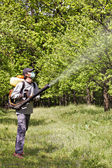 Young farmer spraying the trees with chemicals — Stock Photo