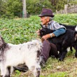 Senior farmer with  three baby goat — Stock Photo #49708497