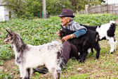 Senior farmer with  three baby goat — Stock Photo