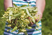 Woman hands holding  linden flowers — Stock Photo