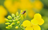 Fly on flower. — Stock Photo