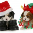 Puppy santa and elf - Stock Photo