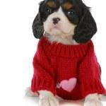 Постер, плакат: Cute puppy