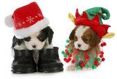 Puppy santa and elf — Stock Photo