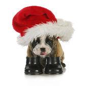 Puppy santa — Stock Photo