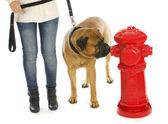 Housetraining dog — Stockfoto
