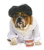 Dog dentistry — Stock Photo