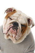 Funny looking dog — Stock Photo