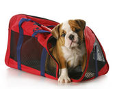 Puppy in a travel bag — Stock Photo