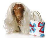 Female goat — Stock Photo