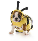 Puppy dressed up like a bee — Stockfoto