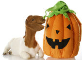 Halloween goat — Stock Photo