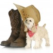 Country dog — Stock Photo #13884055