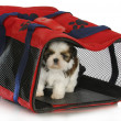 Puppy carrier — Stock Photo