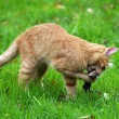 Cat hunting - Stock Photo