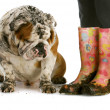 Dirty boots and dirty dog — Stock Photo #13885290