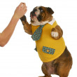Dog giving high five — Stock Photo #13888062