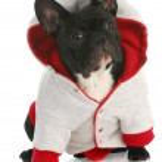 Постер, плакат: Dog wearing coat