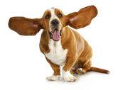 šťastný pes — Stock fotografie