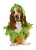 Cadılar bayramı için giyinmiş köpek — Stok fotoğraf