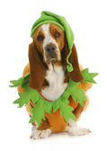 Dog dressed up for halloween — Stock Photo