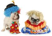 Funny clowns — 图库照片