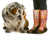Dirty boots and dirty dog — Stock Photo