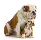 Big and small dog — Stock Photo