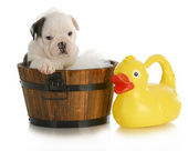 Dog bath — Stock Photo