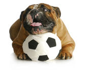Dog playing with ball — Stock Photo