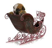 Puppy in a sleigh — Stock Photo