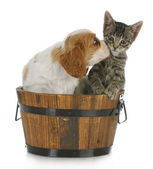 Cute puppy and kitten — Stock Photo