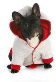 Dog wearing coat — Stock Photo