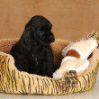 Stock Photo: Puppy sitting in dog bed