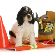 working dog — Stock Photo