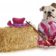 Dog dressed up like cowgirl — Stockfoto #13890285