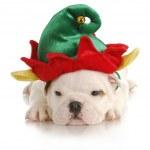 Постер, плакат: Puppy elf