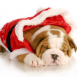 Cute christmas puppy — Stock Photo #13894341