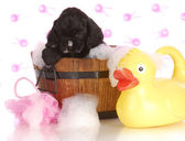 Puppy bath time — Stock Photo