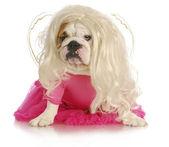 Spoiled dog — Zdjęcie stockowe