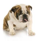 讨厌的狗 — 图库照片